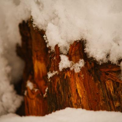 Holz im Schnee